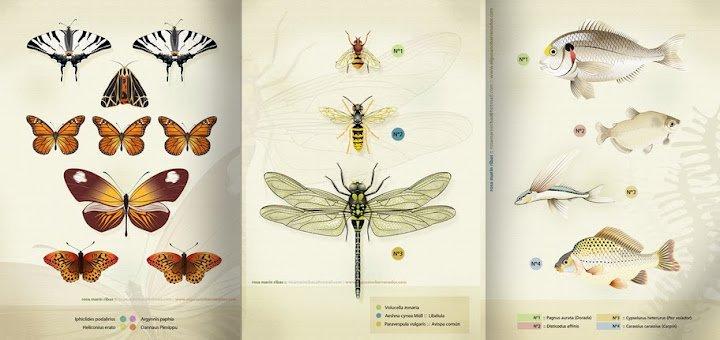 Trois feuilles. Papillons, insectes et poissons dans 2D dessin laminas