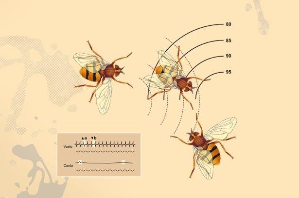 Le vol de la mouche illustration dans 2D dessin vuelomosca