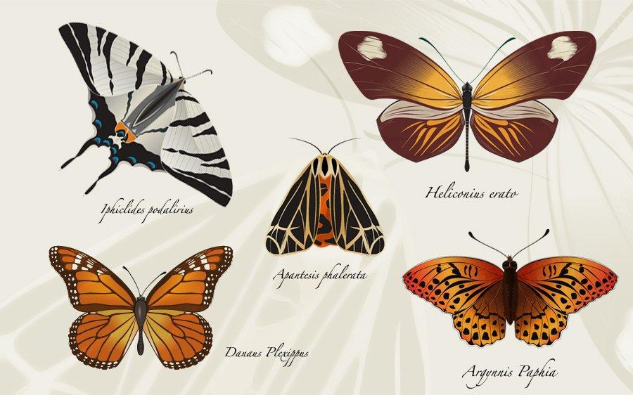 Feuille avec les papillons dans 2D dessin butterflyillustration